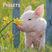 Piglets 2020 Mini 7x7