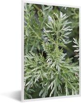 Foto in lijst - Groene kleuren van de alsem plant onder het natuurlijke licht fotolijst wit 40x60 cm - Poster in lijst (Wanddecoratie woonkamer / slaapkamer)