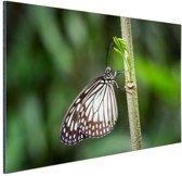 Vlinder wit en zwart Aluminium 90x60 cm - Foto print op Aluminium (metaal wanddecoratie)