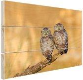 Uilen paar Hout 160x120 cm - Foto print op Hout (Wanddecoratie) XXL / Groot formaat!