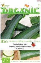 Buzzy® Organic - Courgette Partenon F1 (BIO)