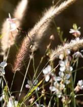 Grasses Notebook