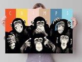 Chimpansees  - Poster 91.5 x 61 cm