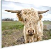 Wit gekleurde Schotse hooglander in het weiland Plexiglas 180x120 cm - Foto print op Glas (Plexiglas wanddecoratie) XXL / Groot formaat!