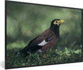 Foto in lijst - Treurmaina zit op de bosbodem fotolijst zwart 60x40 cm - Poster in lijst (Wanddecoratie woonkamer / slaapkamer)