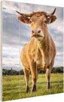 Lichtbruine koe Hout 60x80 cm - Foto print op Hout (Wanddecoratie)