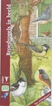 In beeld 12 - Broedvogels in beeld