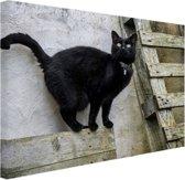 Huiskat staat op een houten plank Canvas 60x40 cm - Foto print op Canvas schilderij (Wanddecoratie woonkamer / slaapkamer) / Dieren Canvas Schilderijen