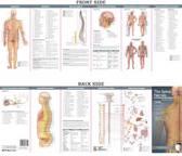 Anatomical Chart Company's Illustrated Pocket Anatomy