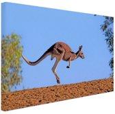 Rode kangoeroe Canvas 80x60 cm - Foto print op Canvas schilderij (Wanddecoratie)