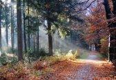 Fotocanvas - Herfstzon door het bos 100 x 70 cm (DSC02736)