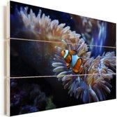 Een Nemo-vis zwemmend in een aquarium Vurenhout met planken 90x60 cm - Foto print op Hout (Wanddecoratie)