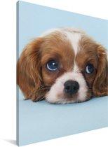 Cavalier King Charles-spaniël puppy Canvas 30x40 cm - klein - Foto print op Canvas schilderij (Wanddecoratie woonkamer / slaapkamer) / Huisdieren Canvas Schilderijen