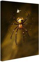 Close-up van spin Canvas 80x120 cm - Foto print op Canvas schilderij (Wanddecoratie woonkamer / slaapkamer) / Dieren Canvas Schilderijen