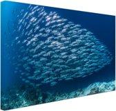School met vissen Canvas 120x80 cm - Foto print op Canvas schilderij (Wanddecoratie woonkamer / slaapkamer)