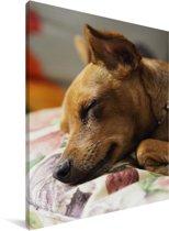Een kleine bruine Dwergpinscher ligt te slapen Canvas 30x40 cm - klein - Foto print op Canvas schilderij (Wanddecoratie woonkamer / slaapkamer) / Huisdieren Canvas Schilderijen
