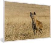Foto in lijst - Een Hyena houdt de wacht tussen het gras fotolijst wit 60x40 cm - Poster in lijst (Wanddecoratie woonkamer / slaapkamer)