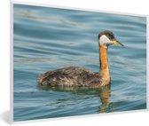 Foto in lijst - Roodhalsfuut in het knalblauwe water fotolijst wit 60x40 cm - Poster in lijst (Wanddecoratie woonkamer / slaapkamer)