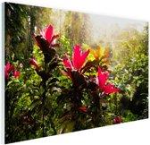 Prachtige tempel middenin de jungle Glas 180x120 cm - Foto print op Glas (Plexiglas wanddecoratie) XXL / Groot formaat!