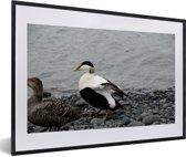 Foto in lijst - Twee eidereendjes aan de rand van het water fotolijst zwart met witte passe-partout 60x40 cm - Poster in lijst (Wanddecoratie woonkamer / slaapkamer)