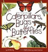 Caterpillars, Bugs and Butterflies