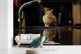 Fotobehang vinyl - Een Abessijn kat op het aanrecht breedte 420 cm x hoogte 280 cm - Foto print op behang (in 7 formaten beschikbaar)