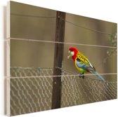 Kleurrijke parkiet op een hek Vurenhout met planken 60x40 cm - Foto print op Hout (Wanddecoratie)