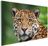 Close-up luipaard  Glas 90x60 cm - Foto print op Glas (Plexiglas wanddecoratie)