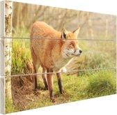 Nieuwsgierige vos Hout 160x120 cm - Foto print op Hout (Wanddecoratie) XXL / Groot formaat!