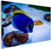 Tropische doktersvis Glas 180x120 cm - Foto print op Glas (Plexiglas wanddecoratie) XXL / Groot formaat!