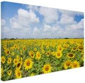 Zonnebloemen veld  Canvas 60x40 cm - Foto print op Canvas schilderij (Wanddecoratie woonkamer / slaapkamer) / Bloemen Canvas Schilderijen