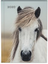 Paarden agenda My favourite friends 2020
