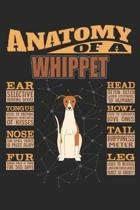 Anatomy Of A Whippet: Anatomy Of A Whippet Notebook Journal 6x9 Personalized Customized Gift For Whippet Mom Dad Lined Paper