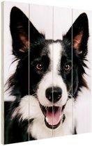 Vrolijke Border Collie Hout 120x160 cm - Foto print op Hout (Wanddecoratie) XXL / Groot formaat!