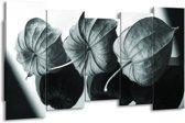 Schilderij | Canvas Schilderij Bloem | Grijs, Groen, Zwart | 150x80cm 5Luik | Foto print op Canvas