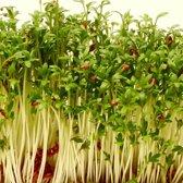 Tuinkers 7.500 kiemzaden biologisch (Lepidium sativum) 25 g