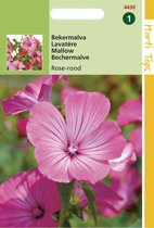 Hortitops Zaden - Lavatera Trimestris Rose/Rood