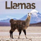Llamas W 2019