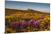 Wilde bloemen in Nationaal park Dartmoor in Engeland Aluminium 180x120 cm - Foto print op Aluminium (metaal wanddecoratie) XXL / Groot formaat!