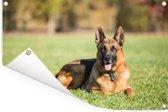 Duitse herdershond ligt op het gras Tuinposter 120x80 cm - Tuindoek / Buitencanvas / Schilderijen voor buiten (tuin decoratie)