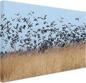 Groep ganzen Canvas 80x60 cm - Foto print op Canvas schilderij (Wanddecoratie woonkamer / slaapkamer) / Dieren Canvas Schilderijen