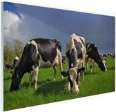 FotoCadeau.nl - Kudde grazende koeien Glas 120x80 cm - Foto print op Glas (Plexiglas wanddecoratie)