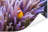 Clown vis die zich in het anemoon verbergt Poster 180x120 cm - Foto print op Poster (wanddecoratie woonkamer / slaapkamer) XXL / Groot formaat!
