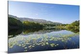 Mooie waterplanten in het water in Snowdonia Aluminium 90x60 cm - Foto print op Aluminium (metaal wanddecoratie)