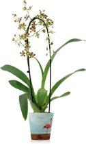 Inca Orchidee Jungle Waterval - Bruin-Wit