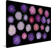 Verschillende aster bloemen Canvas 120x80 cm - Foto print op Canvas schilderij (Wanddecoratie woonkamer / slaapkamer)
