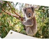 Koala in een boom Tuinposter 60x40 cm - klein - Tuindoek / Buitencanvas / Schilderijen voor buiten (tuin decoratie)