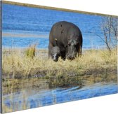 FotoCadeau.nl - Moeder en baby nijlpaarden Aluminium 90x60 cm - Foto print op Aluminium (metaal wanddecoratie)