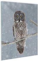 Uil in de sneeuw Glas 120x180 cm - Foto print op Glas (Plexiglas wanddecoratie) XXL / Groot formaat!
