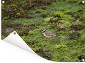 Strandplevier in een groen landschap Tuinposter 160x120 cm - Tuindoek / Buitencanvas / Schilderijen voor buiten (tuin decoratie) XXL / Groot formaat!
